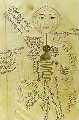 warisan ilmuwan islam untuk ilmu anatomi